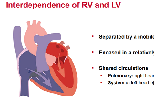 The Right & Left Ventricle Working Together (5 of 6)